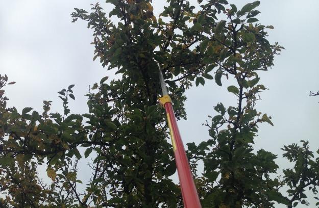 Baumschütteln