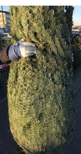 Weihnachtsbaumbeute